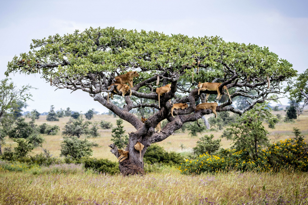 16_CATERS_LIONS_TREE_17.jpg